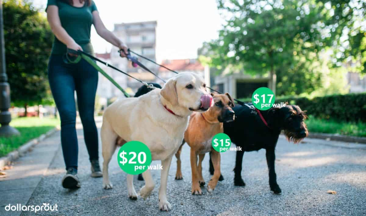 make money quickly with dog walking and pet sitting
